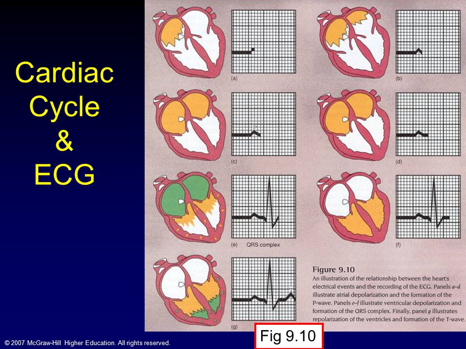 Cardiac Cycle & ECG Fig 9.10