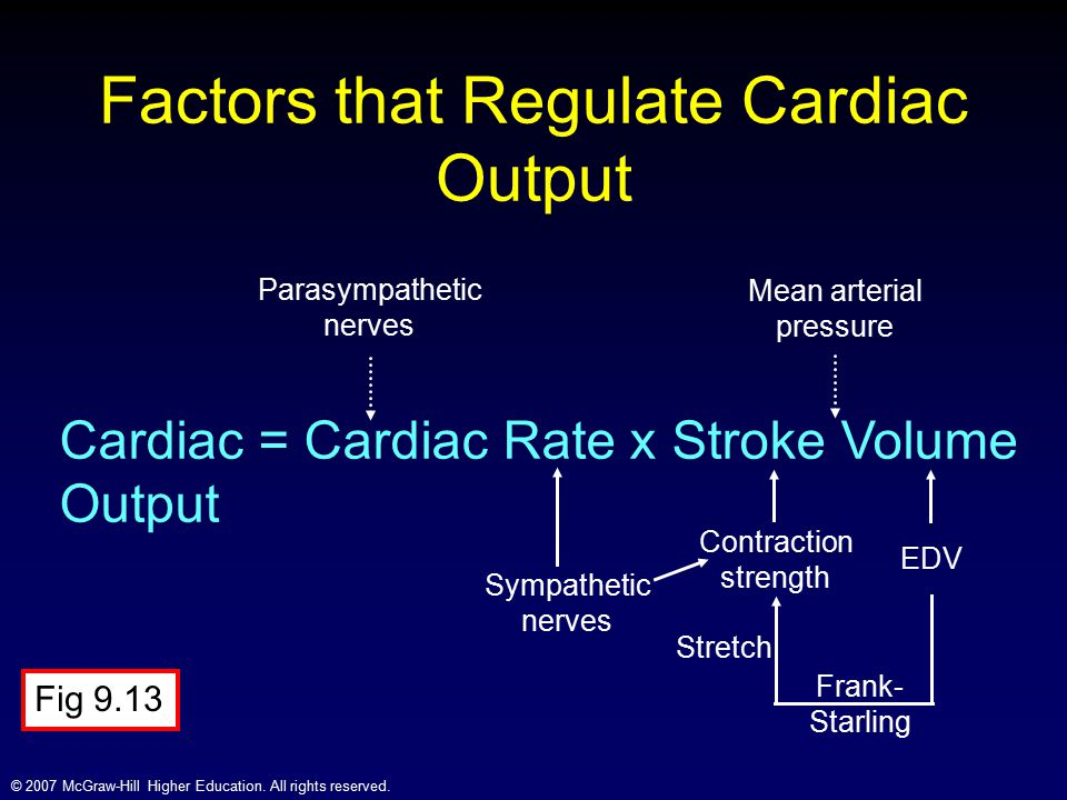 Factors that Regulate Cardiac Output