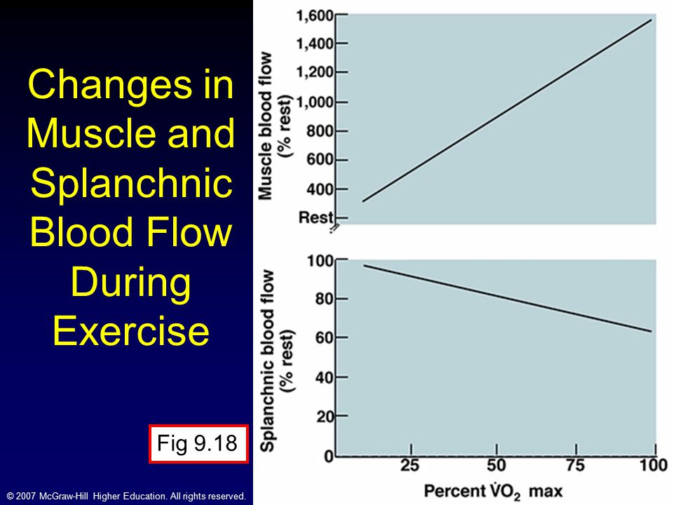 Changes in Muscle and Splanchnic Blood Flow During Exercise