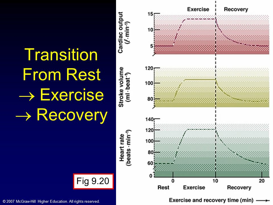 Transition From Rest  Exercise  Recovery