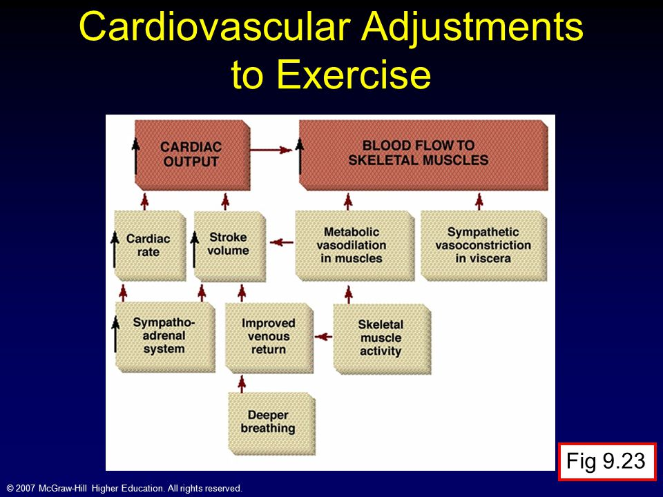 Cardiovascular Adjustments to Exercise
