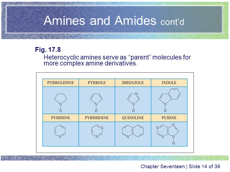 Chapter Seventeen Amines and Amides  - ppt video online download