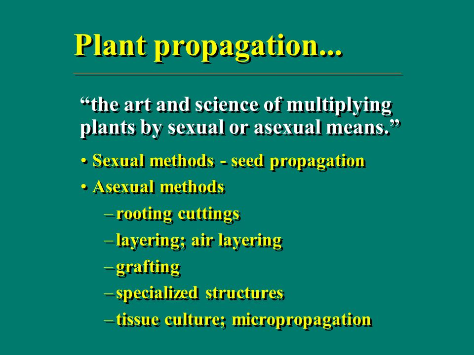 Examples of crops that can be propagated asexually