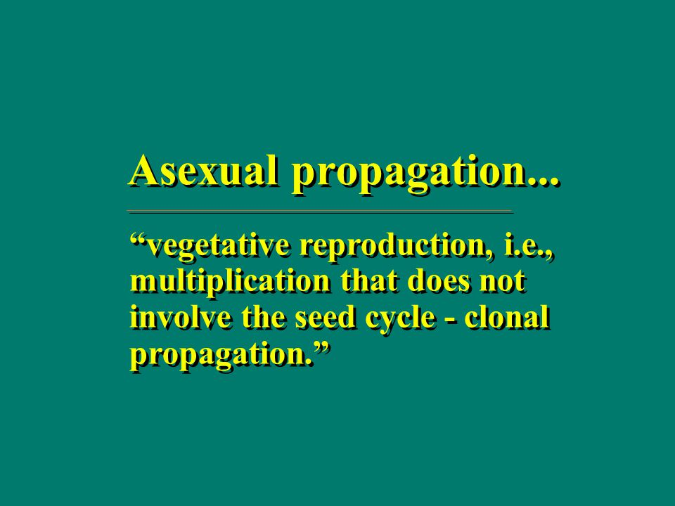 Asexual propagation of horticultural crops in cameroon