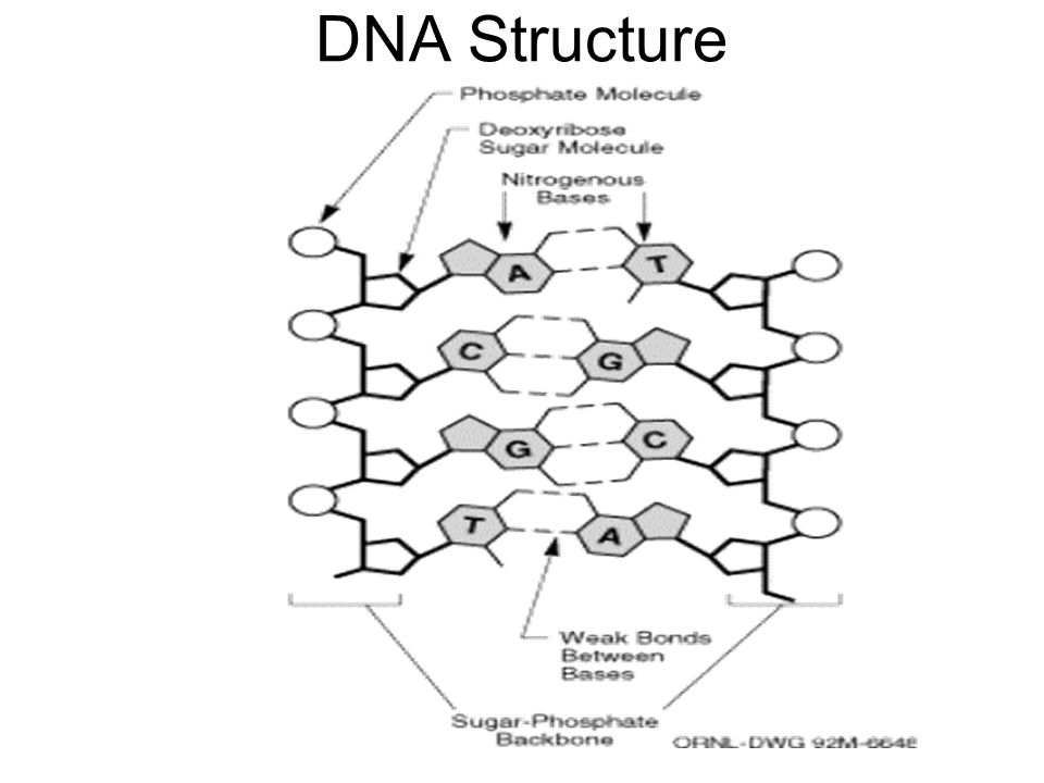 Introduction To Genetics As Relevant To This Course