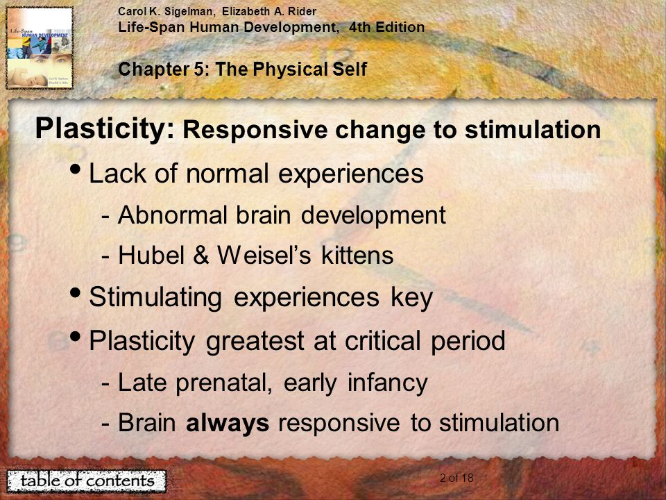 Plasticity: Responsive change to stimulation