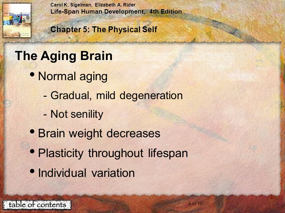 The Aging Brain Normal aging Brain weight decreases