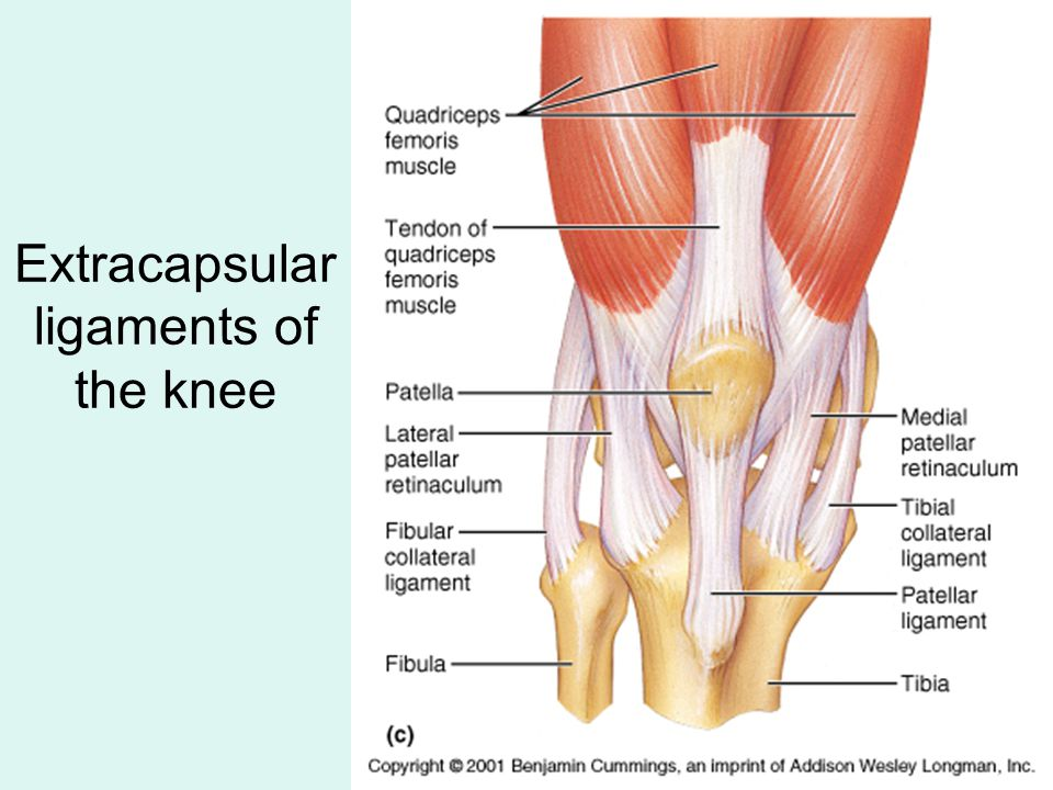 Extracapsular Ligaments Of The Knee