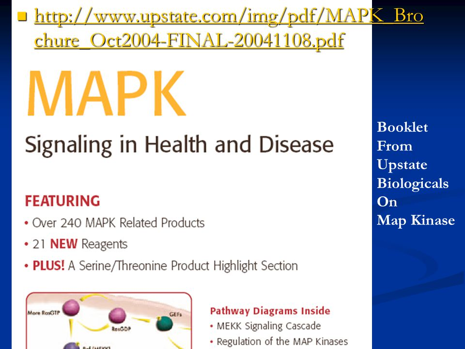 Map Kinase (Map = mitogen-activated protein kinases) what is