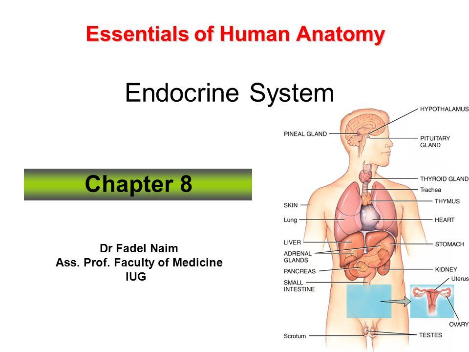 Essentials Of Human Anatomy Endocrine System Ppt Video Online Download