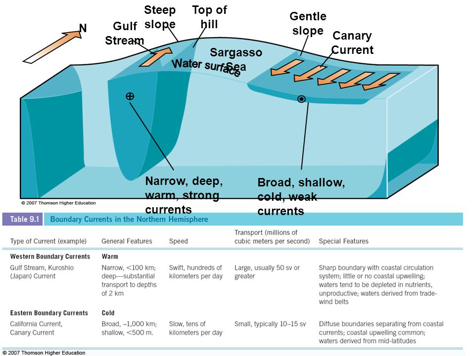 Steep slope Top of hill. Gulf Stream. Canary Current. Sargasso Sea. Gentle slope. N. Narrow, deep, warm, strong currents.