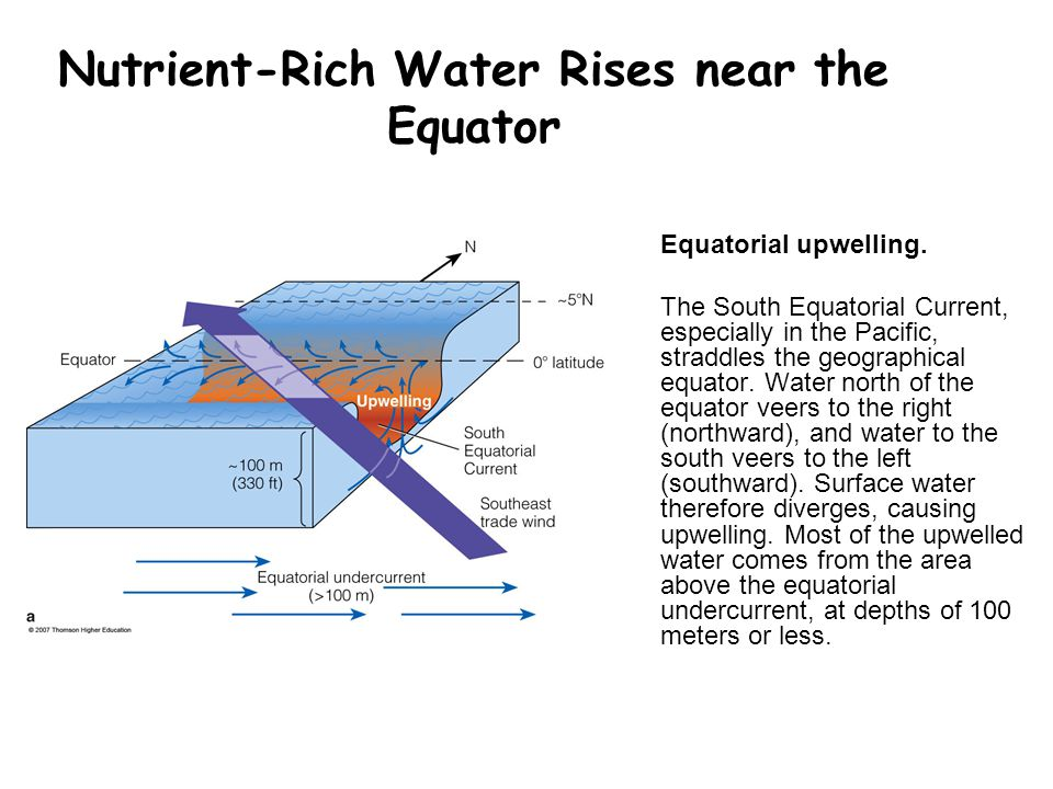 Nutrient-Rich Water Rises near the Equator