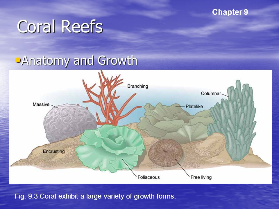 Tropical And Subtropical Shallow Seas Ppt Download