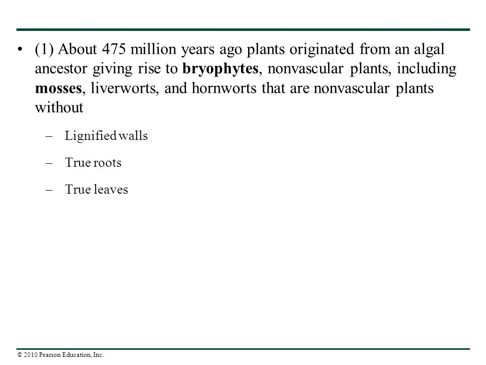 (1) About 475 million years ago plants originated from an algal ancestor giving rise to bryophytes, nonvascular plants, including mosses, liverworts, and hornworts that are nonvascular plants without