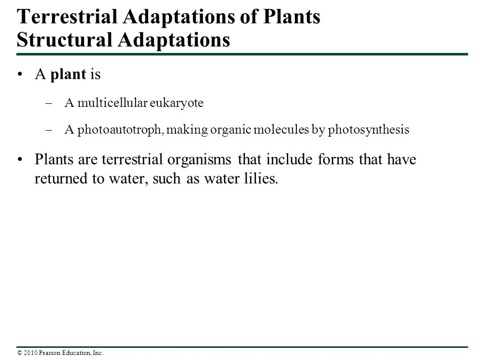 Terrestrial Adaptations of Plants Structural Adaptations