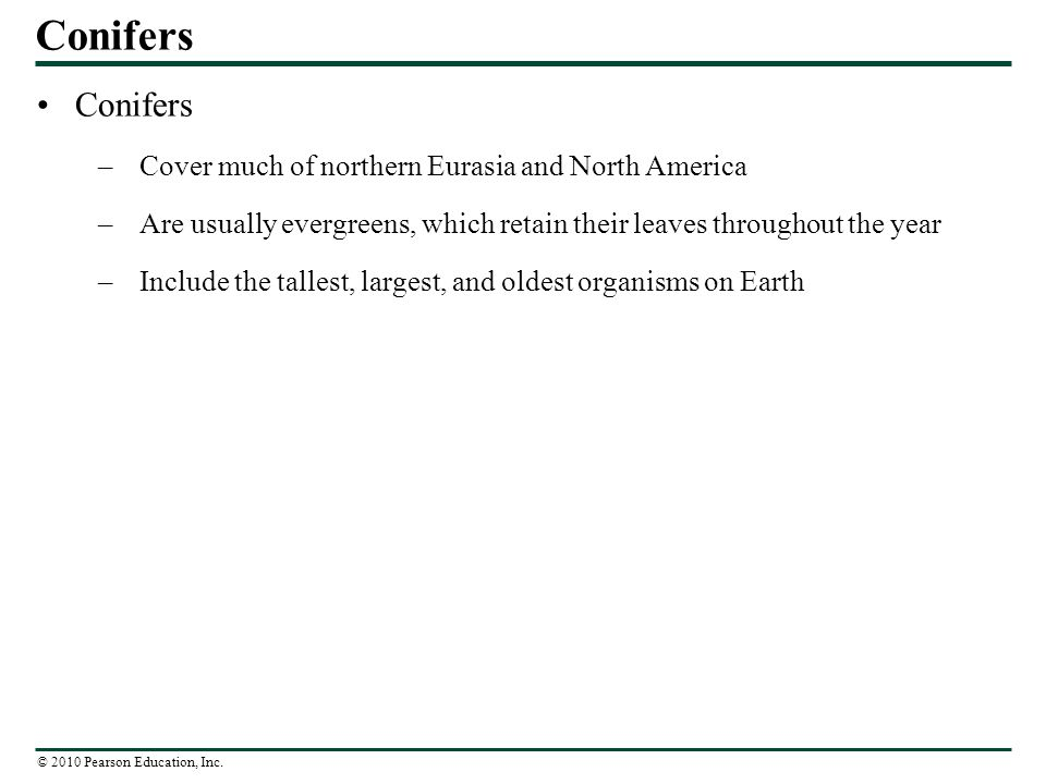 Conifers Conifers Cover much of northern Eurasia and North America