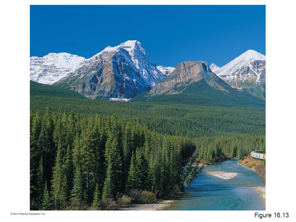 Figure A coniferous forest in Banff National Park, in Alberta, Canada