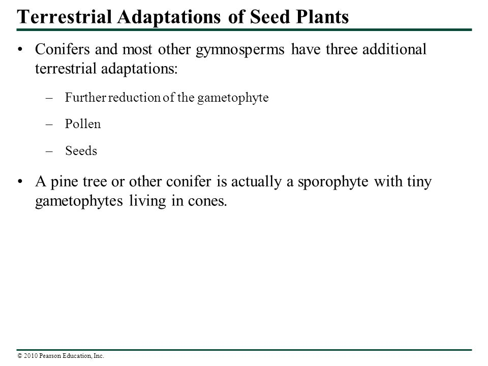 Terrestrial Adaptations of Seed Plants