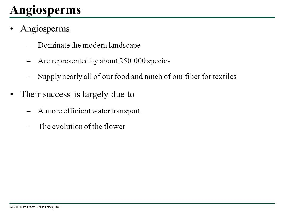 Angiosperms Angiosperms Their success is largely due to