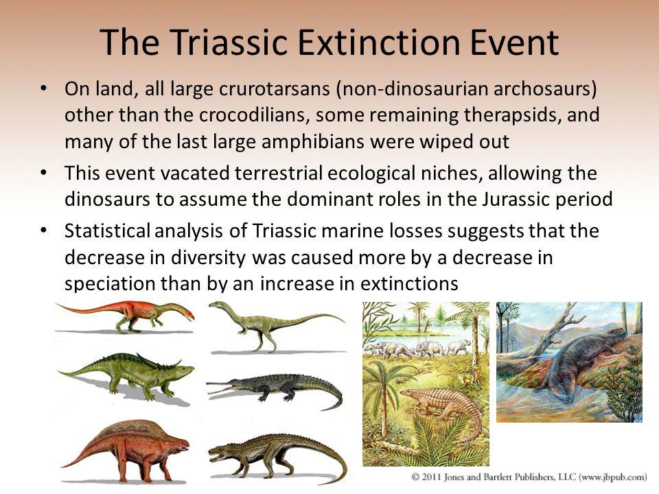 Chapter 18 Mass Extinctions, Opportunities and Adaptive