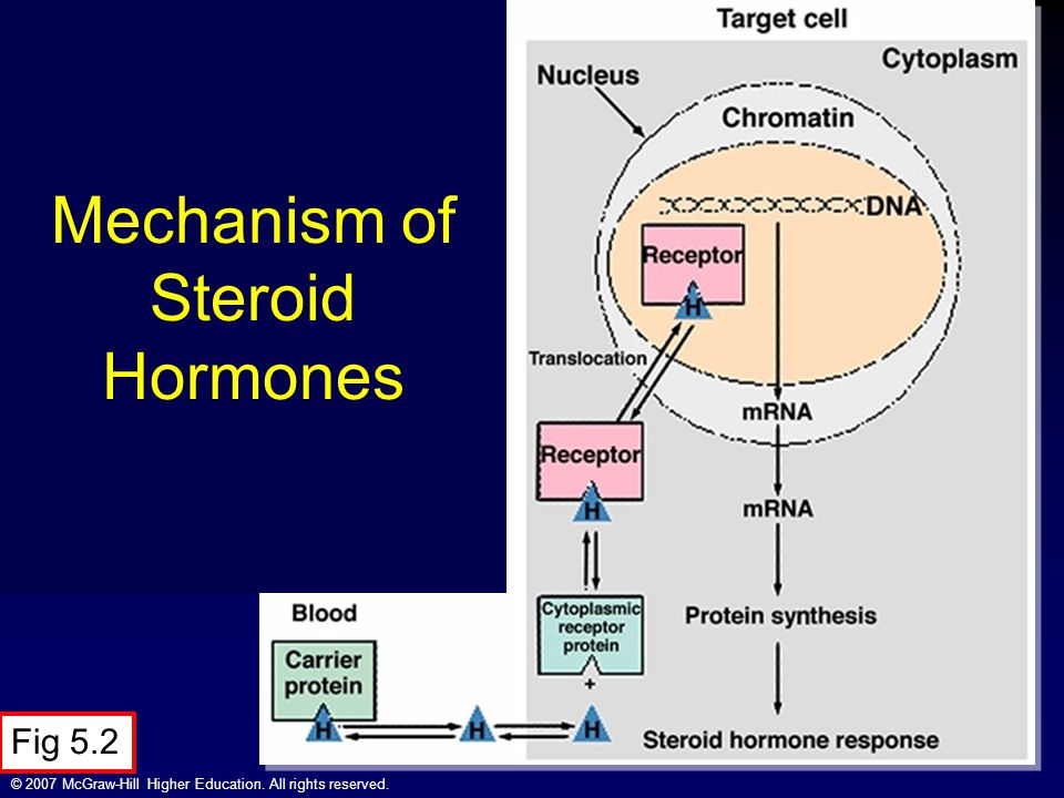 Mechanism of Steroid Hormones