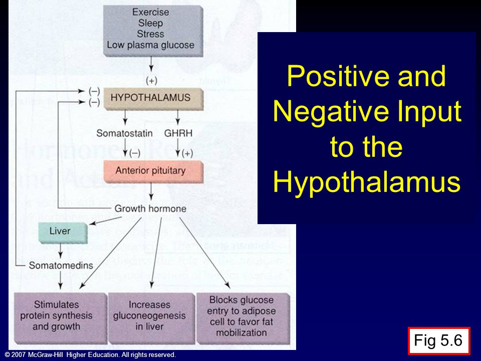 Positive and Negative Input to the Hypothalamus