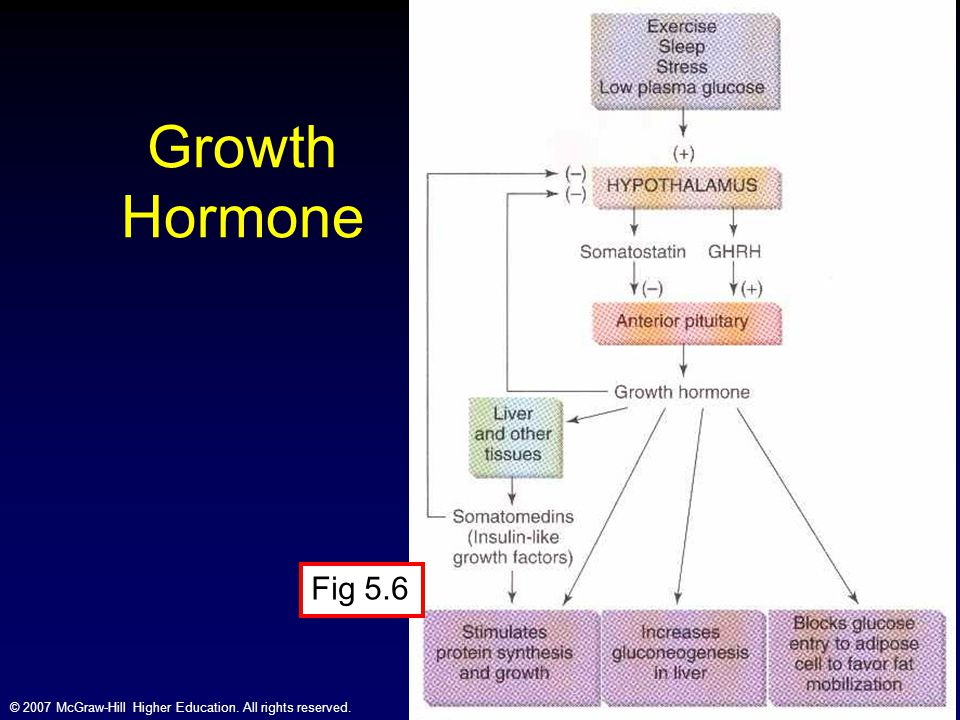 Growth Hormone Fig 5.6