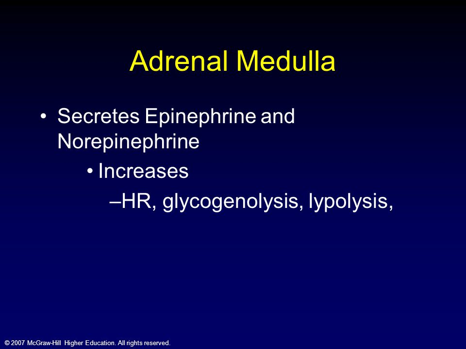 Adrenal Medulla Secretes Epinephrine and Norepinephrine Increases
