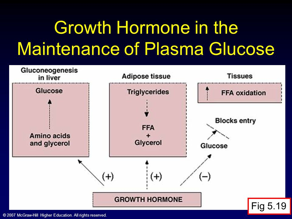 Growth Hormone in the Maintenance of Plasma Glucose