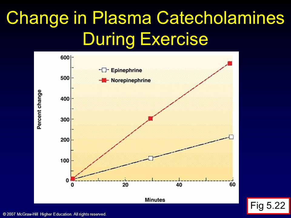 Change in Plasma Catecholamines During Exercise