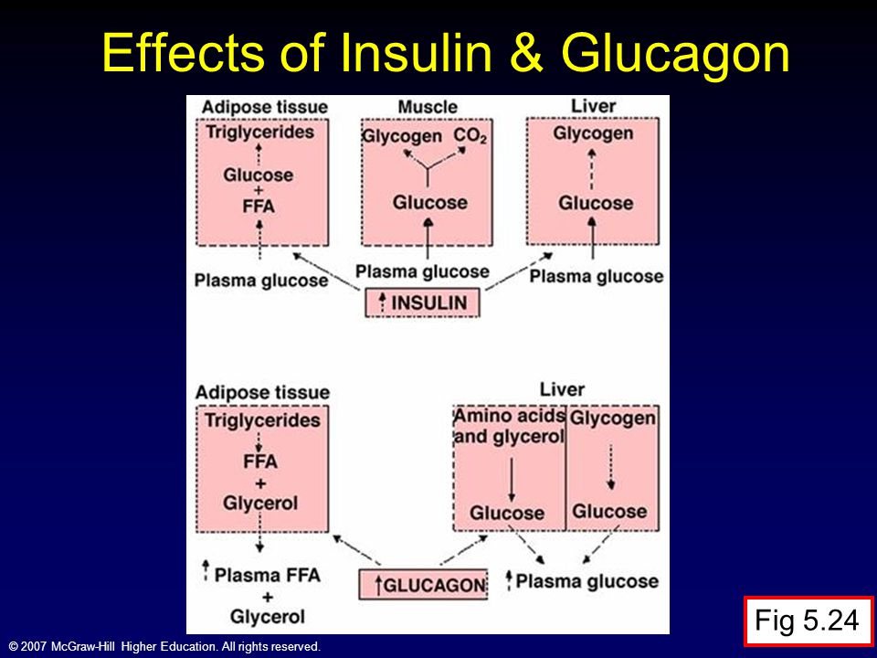 Effects of Insulin & Glucagon