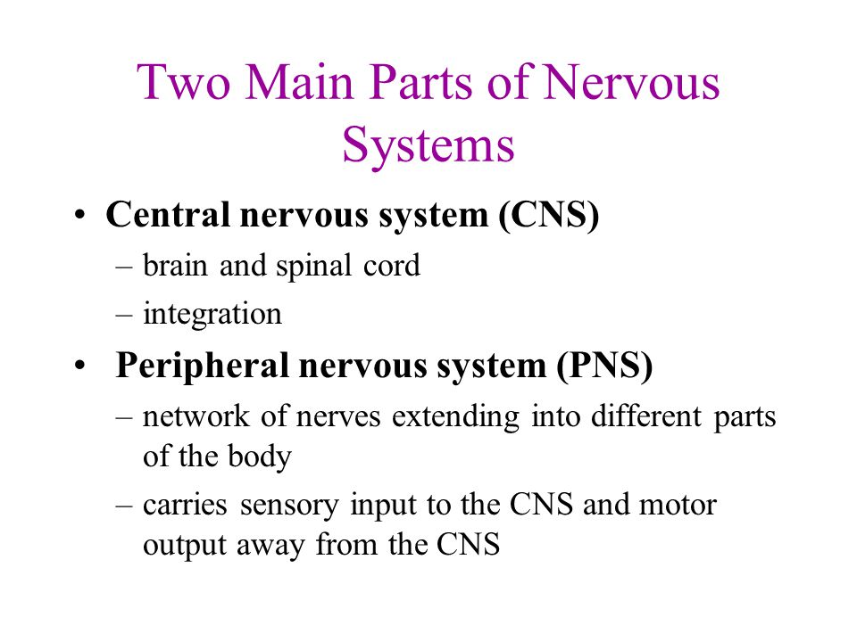 Nervous Systems Three Main Functions 1 Sensory Input 2