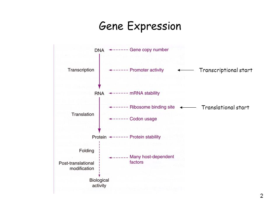 Gene Expression Systems in Prokaryotes and Eukaryotes - ppt