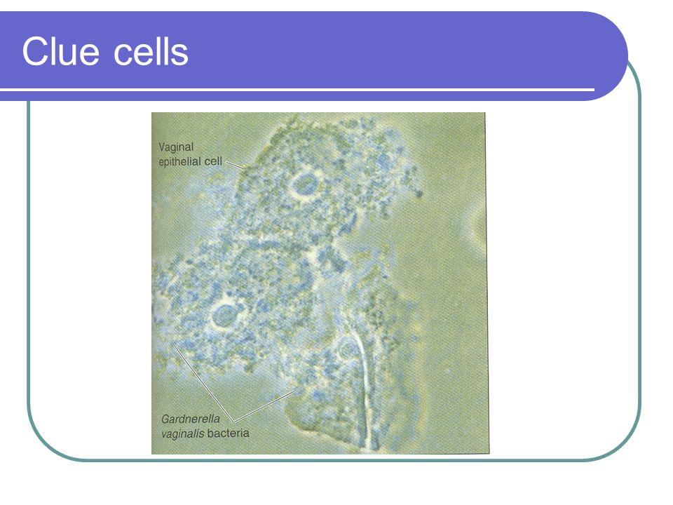 Rickettsia Chlamydia Mycoplasma Legionella And