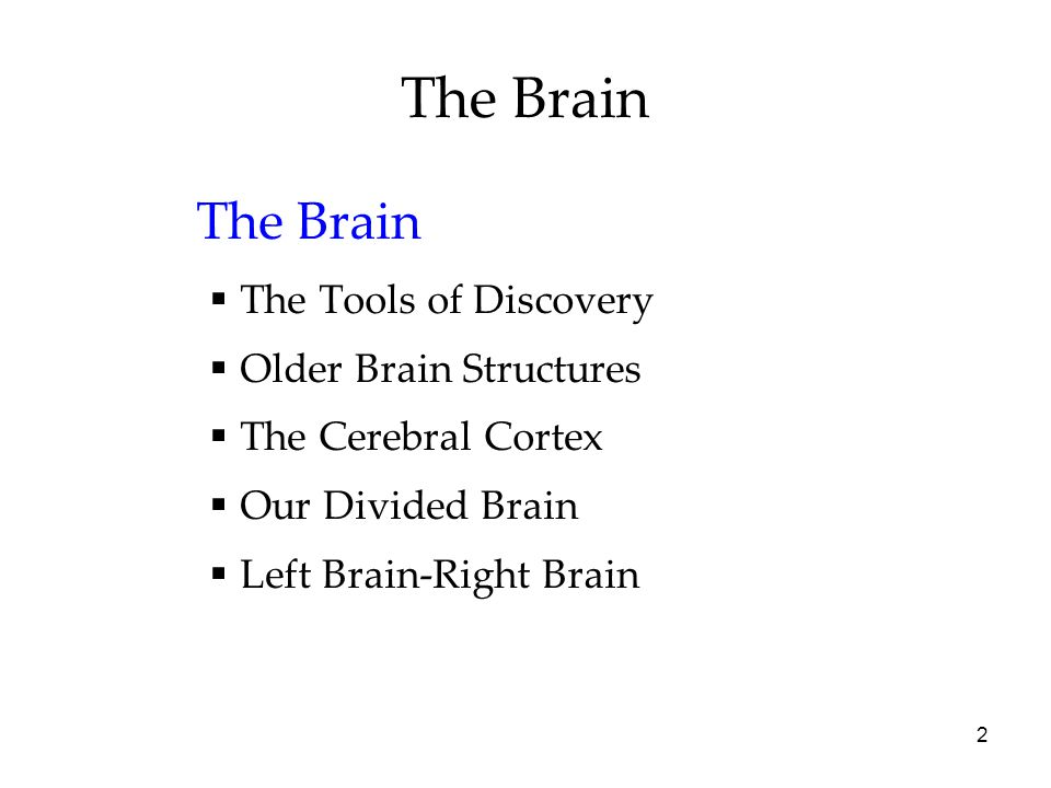 The Brain The Brain The Tools of Discovery Older Brain Structures