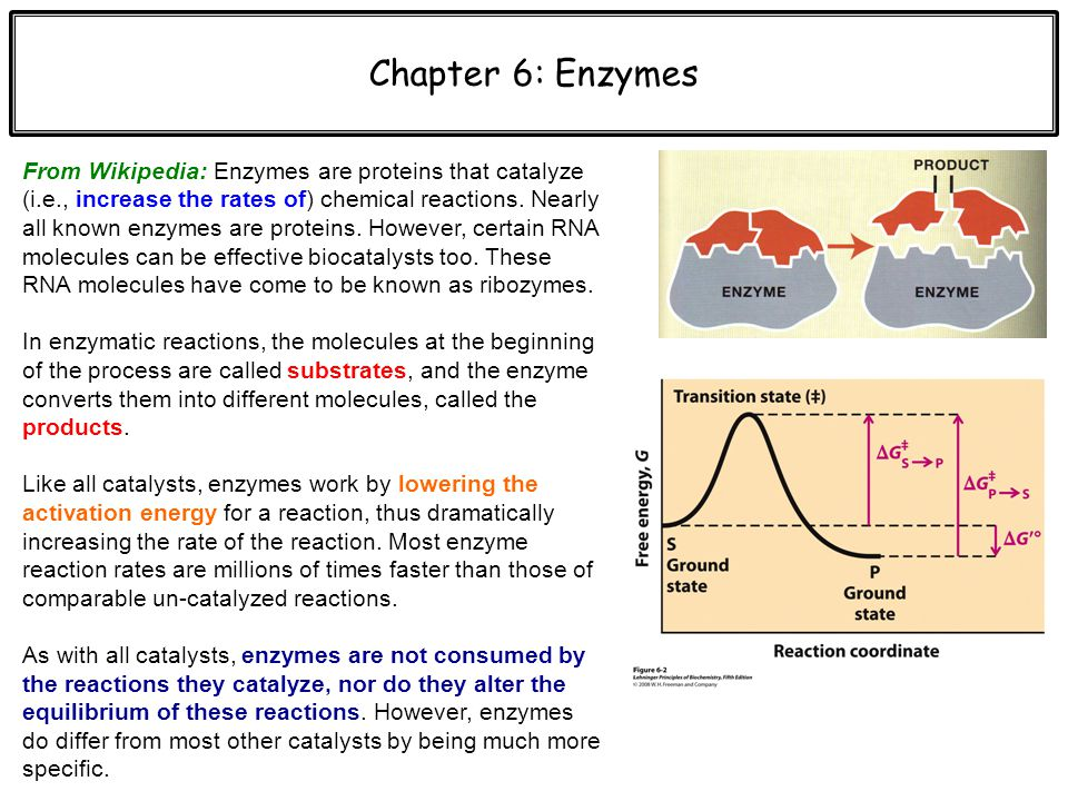 enzyme catalysis essay Enzyme catalysis abstract: catalysis is an enzyme that decomposes hydrogen peroxide into oxygen and water in this lab we will conduct a series of experiments to determine the affects of ph, temperature, and concentration change on such catalysis.