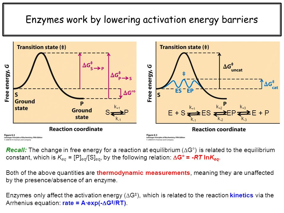 calculating activation energy of catalyzed reaction