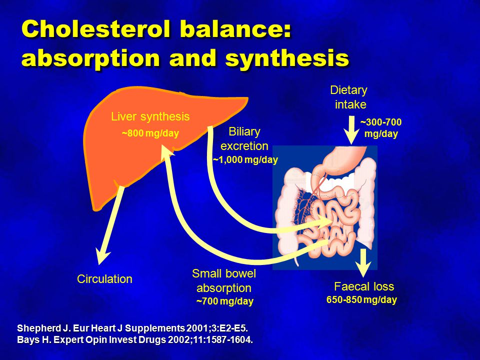 Cholesterol balance: absorption and synthesis