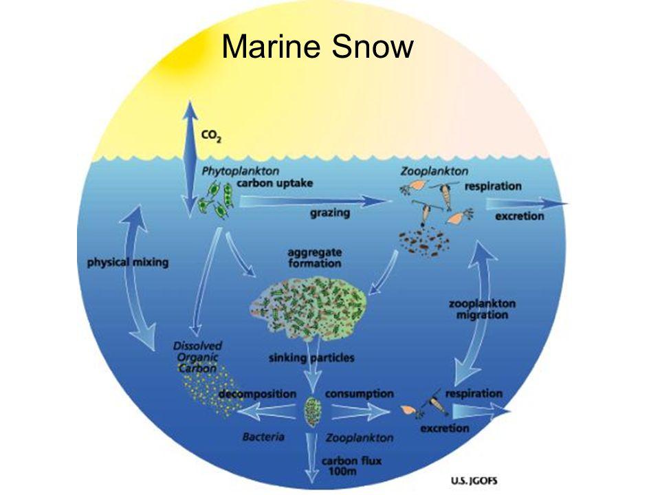 Marine Snow Diagram - Block And Schematic Diagrams •