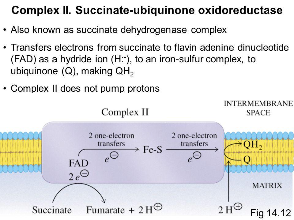 Αποτέλεσμα εικόνας για succinate ubiquinone oxidoreductase (complex I)