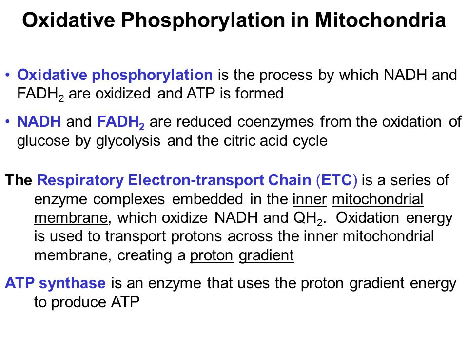 Oxidative Phosphorylation in Mitochondria
