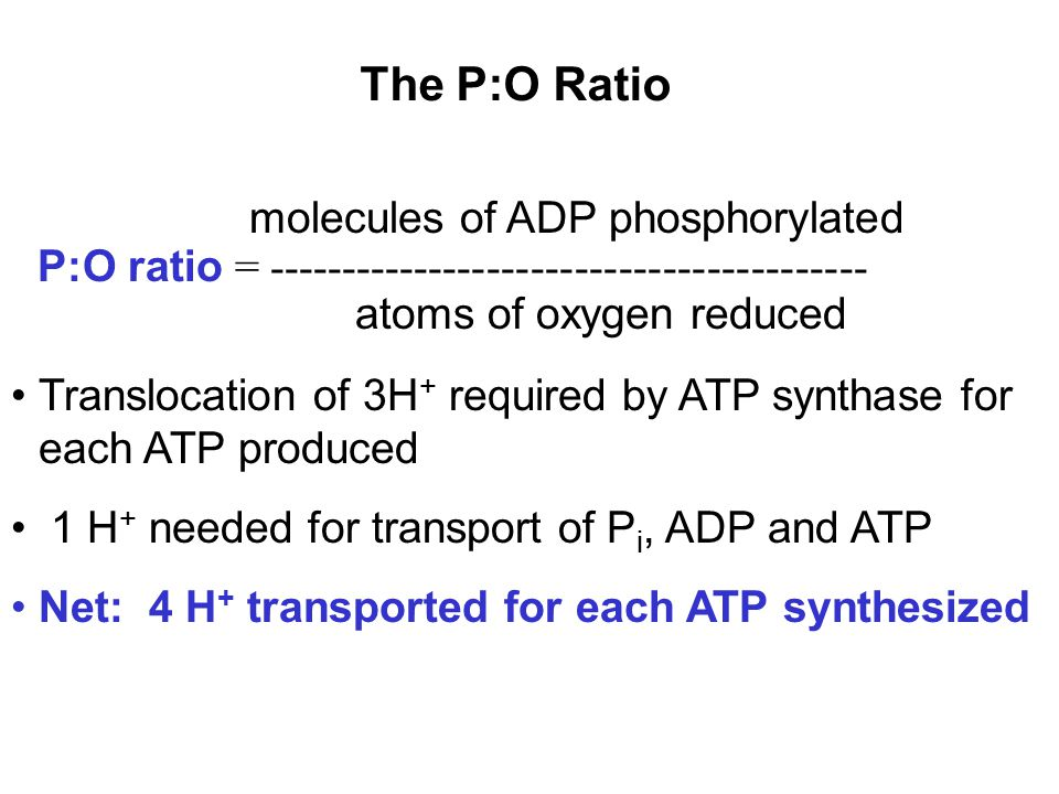 The P:O Ratio molecules of ADP phosphorylated