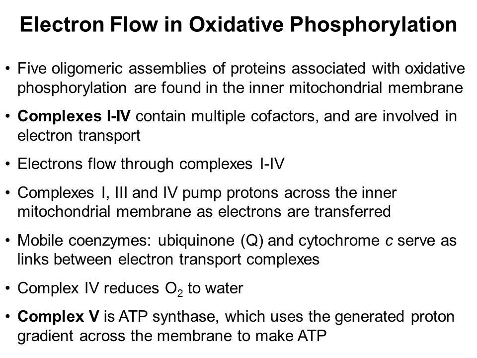 Electron Flow in Oxidative Phosphorylation