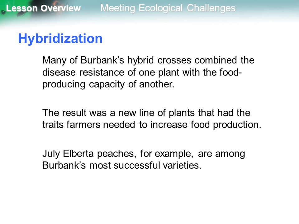 Hybridization Many of Burbank's hybrid crosses combined the disease resistance of one plant with the food-producing capacity of another.