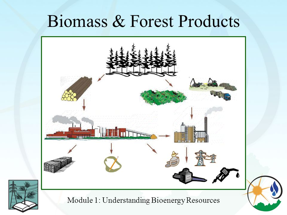 Biomass & Forest Products