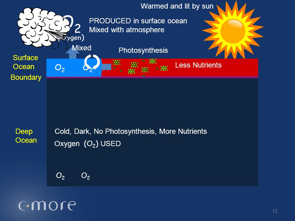 O2 O2 O2 O2 Warmed and lit by sun (oxygen) PRODUCED in surface ocean