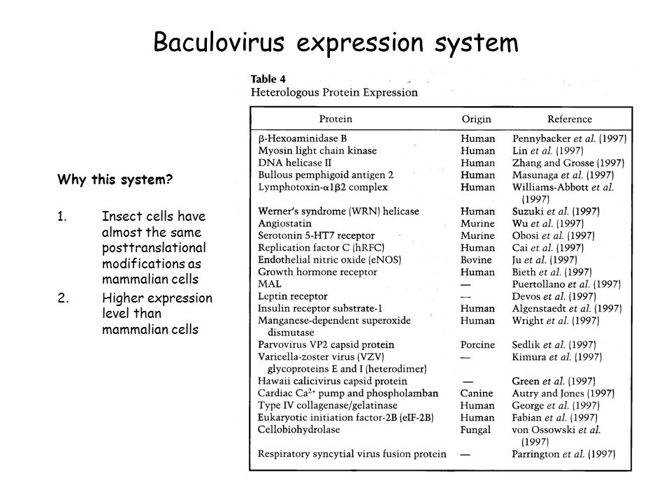 Expression in Eukaryotic Systems - ppt video online download