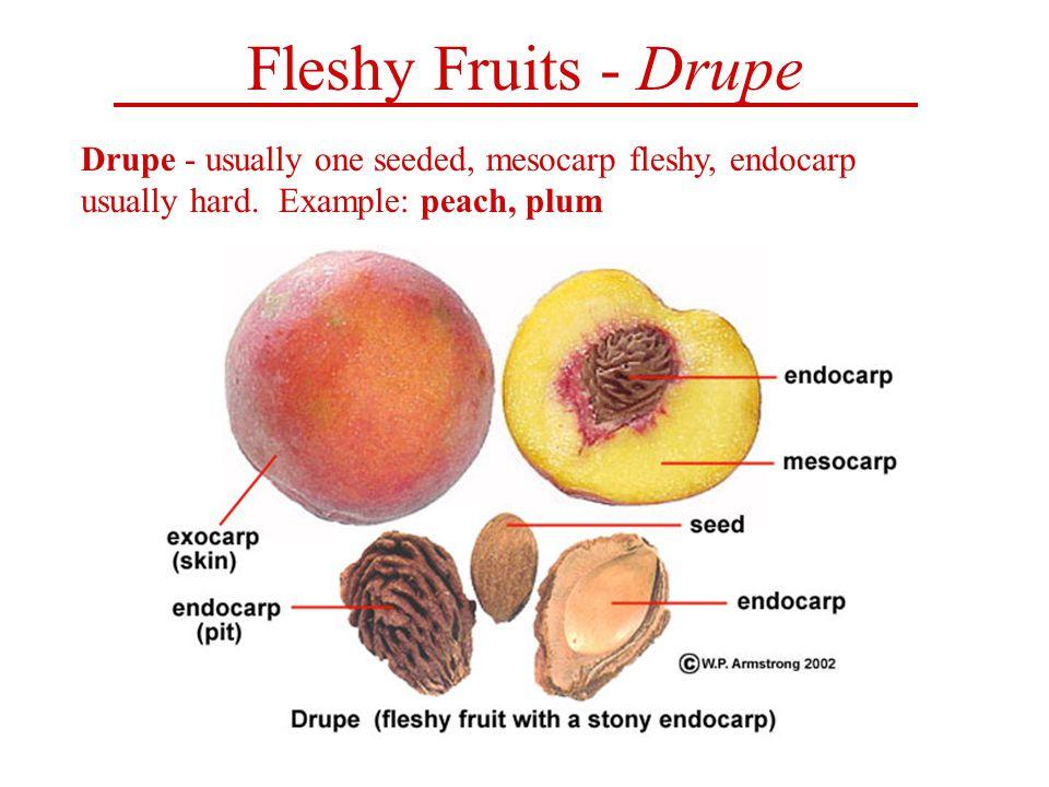 Fruit. Ppt video online download.