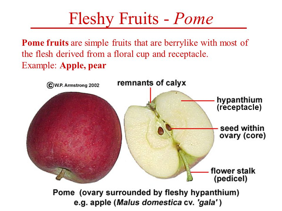 Fruit biology as poetry.