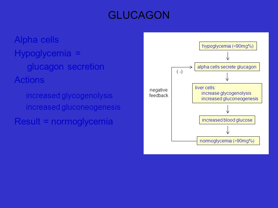 GLUCAGON Alpha cells Hypoglycemia = glucagon secretion Actions